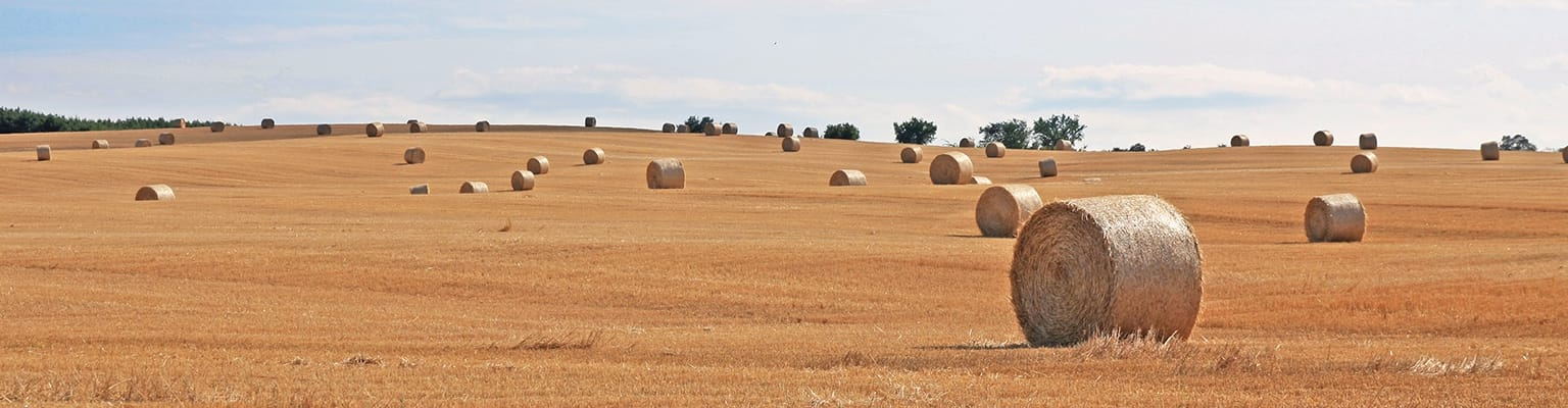 scenic view of hay bales